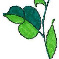 kalocsai levél a színező könyvből